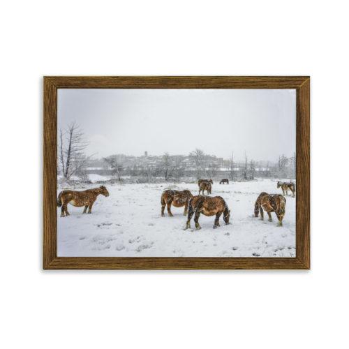 Cuadro caballos Puigcerdà nevado nogal viejo